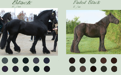 Black Horse Colours by EdithSparrow