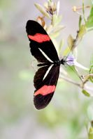 Rosina Butterfly by MaresaSinclair