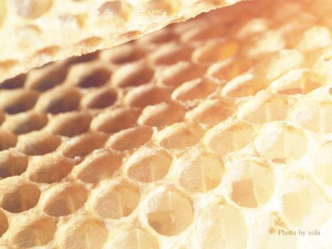 honeycomb by solalis1226