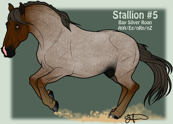Mustang Stallion Adoption 5 by JNFerrigno
