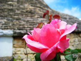 Rosa ad Alberobello by ChemaIllustration