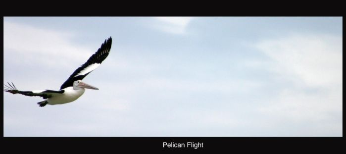 Pelican flight by invader-b0ris