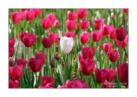 floriade 08 by cdaile