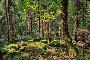 Enchanted Forest by Wanderlouve
