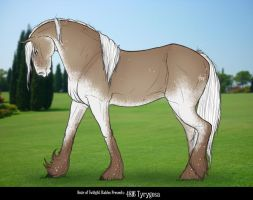 4816 Tyrygosa*SOLD* by HoT-Stables