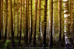 army of trees by LindaMarieAnson