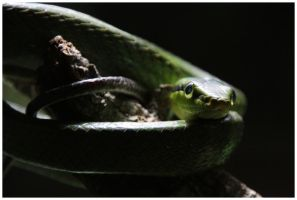 Snake in the dark by DysfunctionalKid