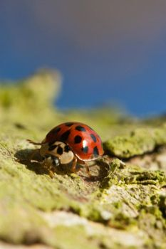 Lady Bug 2 by NoseGraze