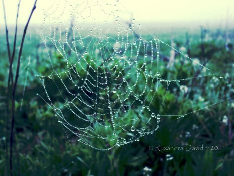 Morning Dew by ruxi27