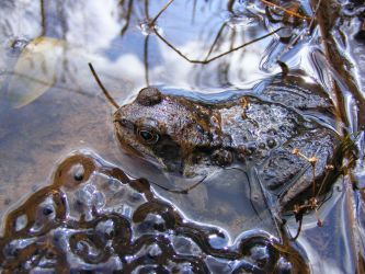 Frog and Spawn 01 by Axy-stock