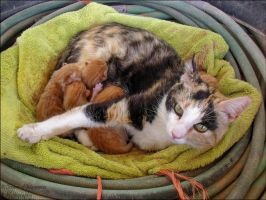Lola and Her Kittens by RMS-OLYMPIC