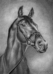 PORTRAIT OF HORSE by blanket86