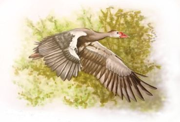 Inktober 1: Spur-Winged Goose by squanpie