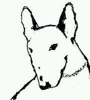 Bull terrier Portrait by overdrive