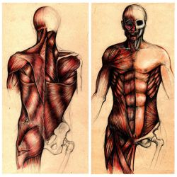 Human Anatomy by BBARTEL