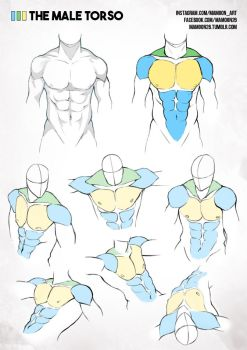 simplified anatomy 01 - male torso by mamoonart