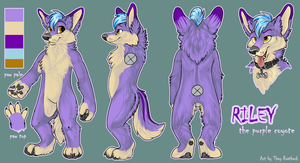 Riley Grayson Character/Fursuit Reference 2013 by RavenShayne