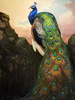 Pavo cristatus by witherlings