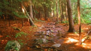 Stone Path. by Sparkle-Photography