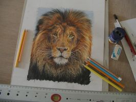 Lion, working space by GW78