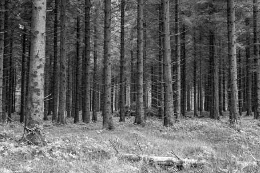 Forest by lukasthebastian