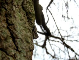 Bark of a Willow Tree by lozzy1992
