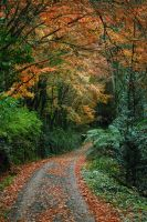 Autumn Road by Shae-photography