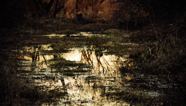 Puddle reflections by MoonKey19