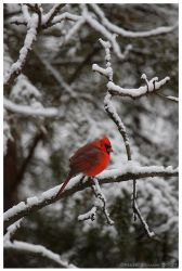 A Shot Of Red by Nate-Zeman