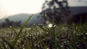 Playing Dew by satyam9999