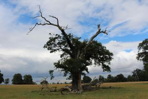 Lonely Tree by fuguestock