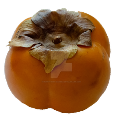Kaki Fruit PNG by Bunny-with-Camera