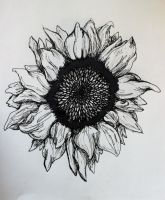 Sunflower by wingedmusician