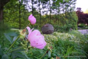 Brookside Gardens flower by Devine-Escapes