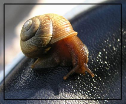 Snail on rubber by lexidh