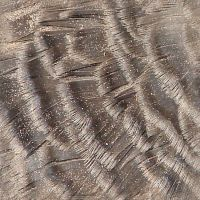 Turkey Feather Texture Tile 1 by FantasyStock