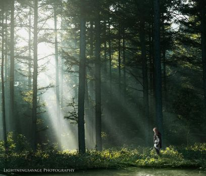 Light in the Forest by MagicalPoliceBox
