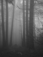 Trees in the clouds by sjbvrsn