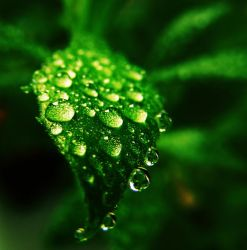 macro drops by rockmylife