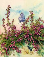 Heather, carabid beetle, silver-studded blue by LynneHendersonArt