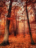 autumn forest by Weissglut