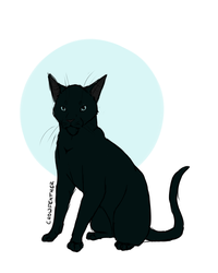 Crowfeather by Tawas