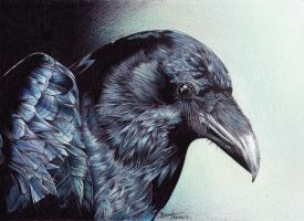 Crow by be-a-sin