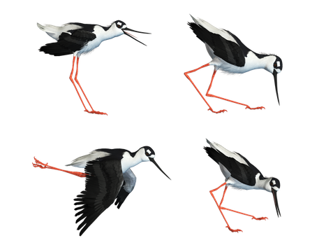 Wading Bird 03 PNG Stock by Roy3D