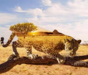 Leopard Double Exposure by Flowful