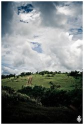 Route to the Cane Fields by stackelberg