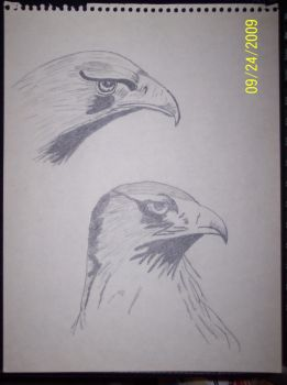Eagles by yesyes5