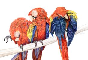 Preening Macaws by ursulav