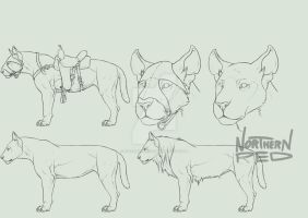Feline species concept + full perms *Closed* by NorthernRed