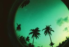 fisheye camarines - palm trees by jcgepte